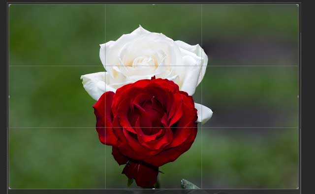 Proses focus stacking photoshop 9